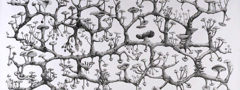 Nouvel appel à bourses «Racines et Pollens» par la Fondation Mycelium