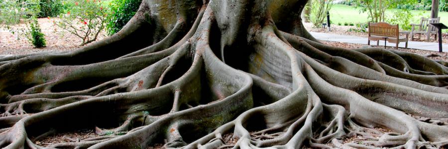 Ecopsychologie et ecologie profonde